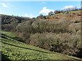 SS6743 : Wooded hillside near Twineford by Roger Cornfoot