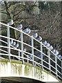 NU0501 : Black-headed gulls  (Chroicocephalus ridibundus) by Russel Wills