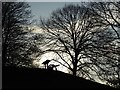 SO8554 : Silhouetted cannon and trees by Philip Halling