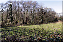 ST0881 : Deciduous Woodland by Alan Hughes