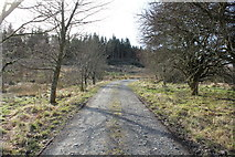 NX5987 : Forest Road to Polmaddy Historic Settlement by Billy McCrorie