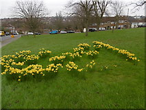 TQ2794 : Daffodils at Rushdene Avenue, East Barnet by Marathon