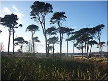 NT6378 : Coastal East Lothian : Paaarrrtay! by Richard West