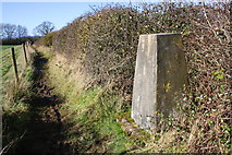 SP3812 : North Leigh trig point beside muddy footpath by Roger Templeman