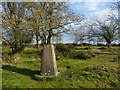 SY3798 : Trigpoint, Lambert's Castle by Becky Williamson
