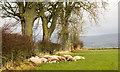 NY5834 : Somnolent sheep in field east of Winskill by Trevor Littlewood