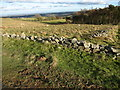 SJ1564 : Small conifer plantation & grazing fields in the Clwydian Hills by Maggie Cox