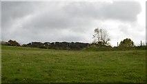 SX5052 : Field near Hooe by N Chadwick