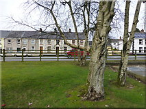 H4573 : Trees, Omagh Health Centre by Kenneth  Allen