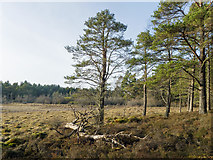 NH5753 : Area of bog within the Monadh Mòr bog forest by Julian Paren