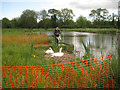 SP2964 : Nesting swans with admirer, Kingfisher Pool, Myton, Warwick by Robin Stott