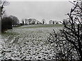 H4376 : Wintry at Mountjoy Forest East Division by Kenneth  Allen