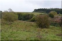 SU3168 : Freeman's Marsh by N Chadwick