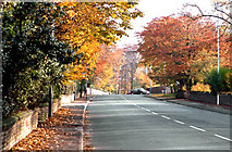 SJ7886 : Autumn on Hale Road by Anthony O'Neil