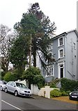 TQ3370 : Fox Hill: monkey-puzzle and Victorian villas by Stefan Czapski