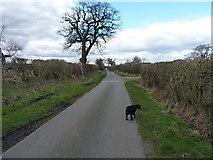 SJ8615 : Along Woollaston Lane towards Church Eaton by Richard Law