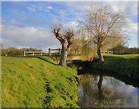 TQ2173 : Beverley Brook: willows by a bridge by Stefan Czapski