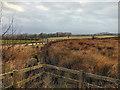 SD6314 : Rivington Moor by David Dixon
