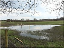 SJ7949 : Halmer End: flooded field at Chapel Farm by Jonathan Hutchins