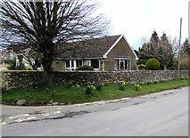 SO8700 : Early March daffodils, Woefuldane Bottom, Minchinhampton by Jaggery
