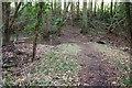 ST6562 : Path through Common Wood by Derek Harper