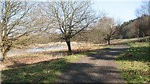 TG1608 : Path along the edge of Colney Wood by Evelyn Simak