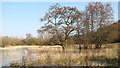 TG1608 : Waterlogged trees on the edge of Colney Wood by Evelyn Simak