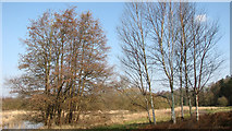 TG1608 : Trees beside the path along the edge of Colney Wood by Evelyn Simak