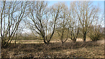 TG1608 : Trees on a field boundary by Evelyn Simak