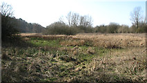 TG1608 : Along the northern edge of Colney Wood by Evelyn Simak