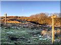 SD6612 : Path up Winter Hill by David Dixon