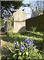 ST6665 : Early flowers in the churchyard by Neil Owen