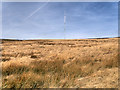 SD6613 : Smithills Moor and Winter Hill Transmitter Mast by David Dixon