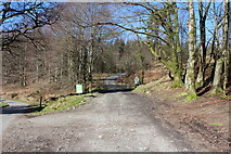 NX4464 : Track into Kirroughtree Forest by Billy McCrorie
