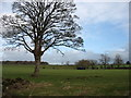 NY4633 : Farmland at Laithes by David Purchase