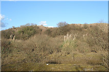 SS8280 : Vegetation on disused land in Cornelly quarry country by eswales