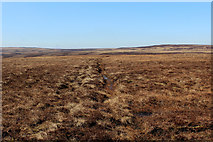 SD9635 : Boundary Line on Middle Moor Flat by Chris Heaton