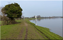SK6443 : Trent river bank at Burton Joyce by Mat Fascione