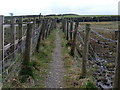 SE2401 : Narrow fenced footpath by Graham Hogg