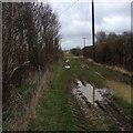 TL1361 : Alongside Hook Wood by Dave Thompson