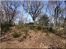 SX7779 : Path in Yarner Wood by David Smith