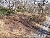 SX7779 : Wood ants' nest in Yarner Wood by David Smith