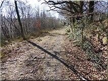 SX7678 : Footpath in Yarner Wood by David Smith