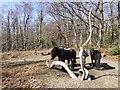 SX7778 : Dartmoor ponies and artwork, Yarner Wood by David Smith