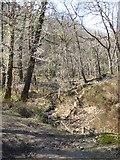 SX7778 : Stream in Yarner Wood by David Smith