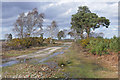 SU9153 : Track, Ash Ranges by Alan Hunt
