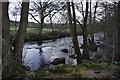 SE1960 : River Nidd by N Chadwick