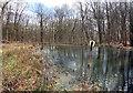 SU5472 : Pond in Hawkridge Wood by Des Blenkinsopp