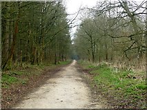 SK5952 : Track in Sansom Wood by Graham Hogg