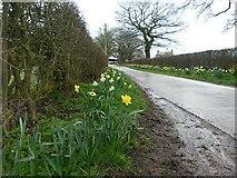 SK5854 : The lane to Bottom Farm by Graham Hogg